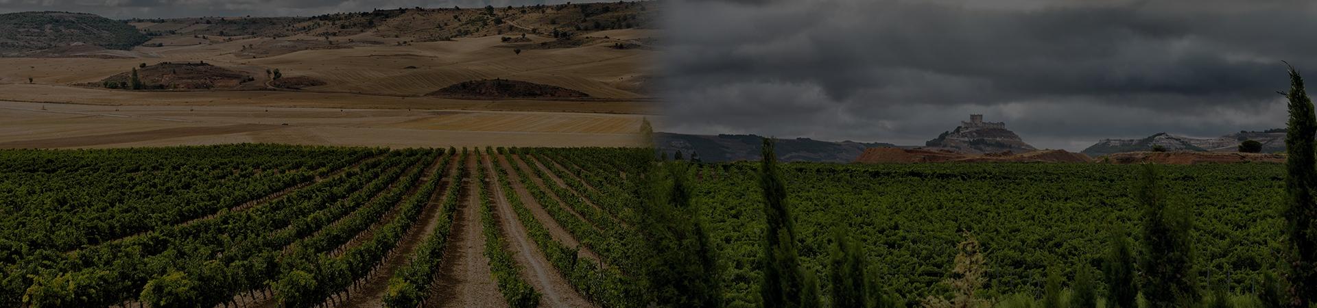 Alma Serena, Bodegas Penafiel, Ribera Del Duero